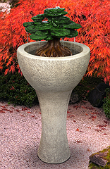 Tall Bonsai Fountain