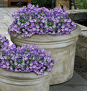 Large Rolled Rim Planter
